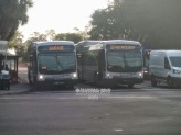 #'s 15102 and 12101 at Williams Park.